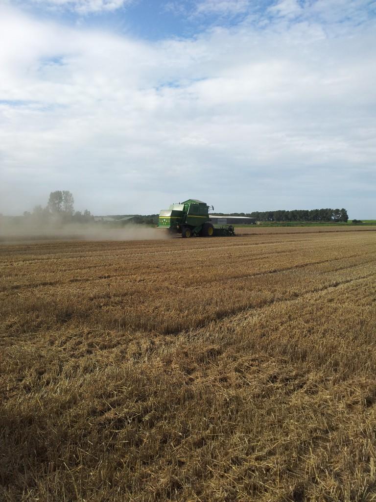 Een machine oogst het gewas bij Tok Tok de Dobbelaere